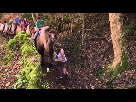 Bayern Kamele - Kamelreiten im idyllischen Mangfalltal