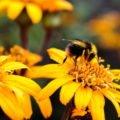 Insektenstiche bei Kleinkindern
