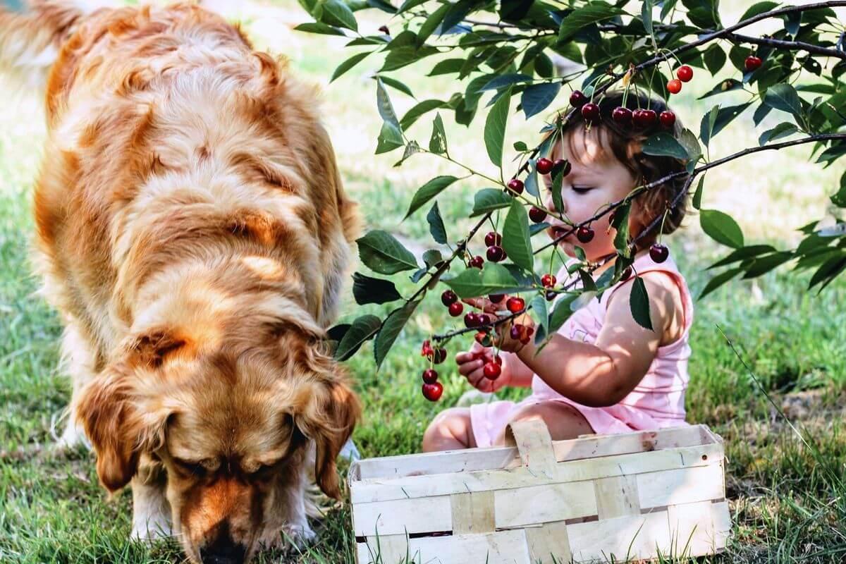 Hunderasse, Familienhund